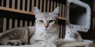 Przysmaki dla kota