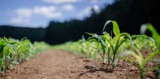 W jaki sposób macie zamiar walczyć z obrotną rośliną